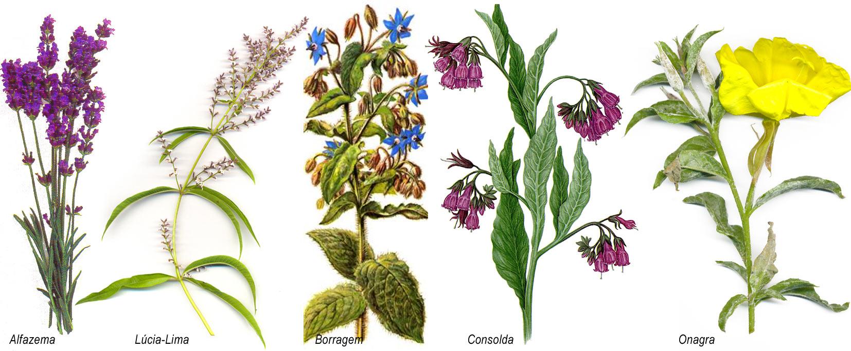 Plantas medicinais e arom ticas casa bioluminosidade - Plantas aromaticas en casa ...